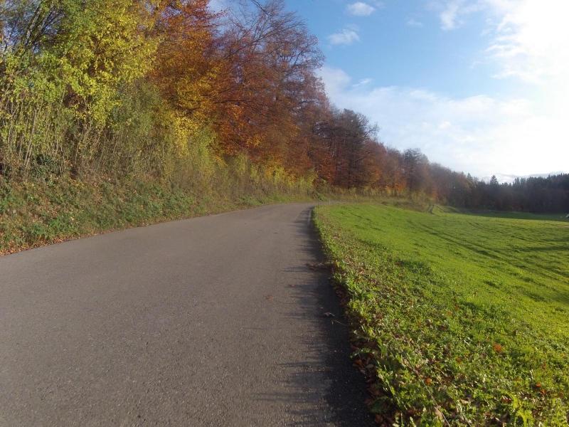 Herbstlicher Waldrand zwischen Schafisheim und Seon