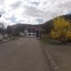 Forsythie in Wallbach