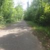 durch die Auenwälder entlang der Aare