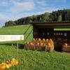 Kürbis-Hüsli bei Hertenstein