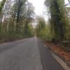 In den Auenwäldern