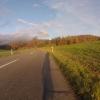 Herbstlicher Wald, oberhalb Ammerswil