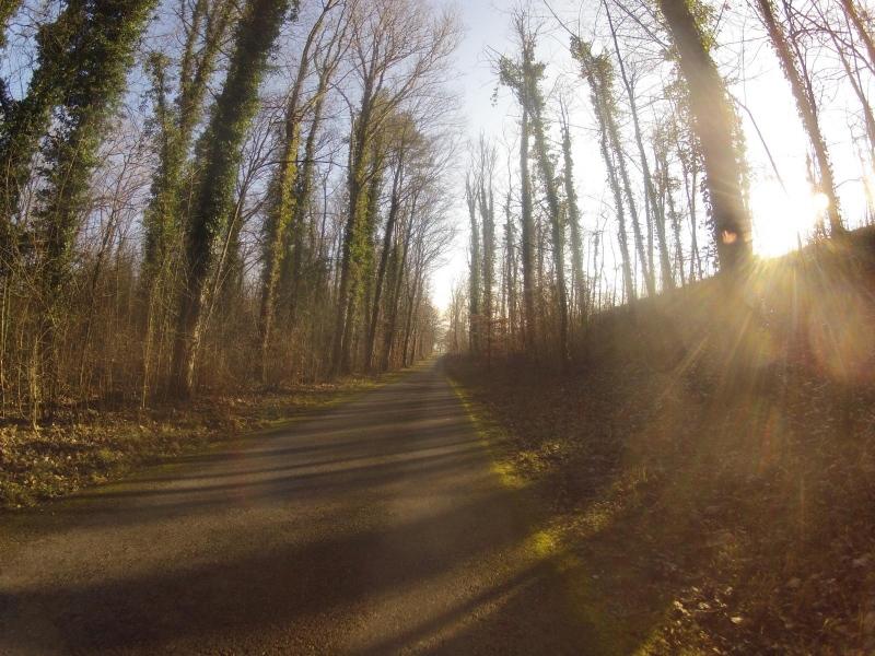 in den Auenwäldern der Aare entlang