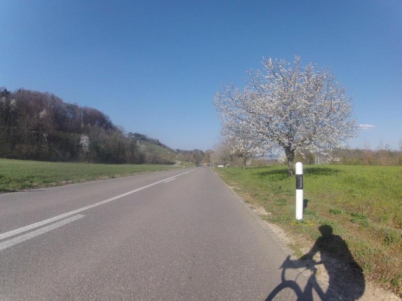 Schinznach-Dorf