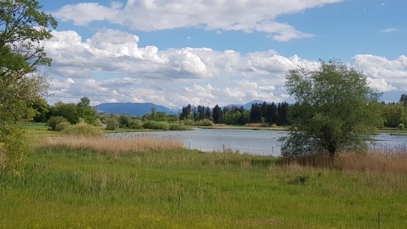 Flachsee an der Reuss bei Bremgarten