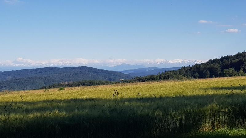 Blick zum Alpenkamm aus der Nähe der Linner Linde