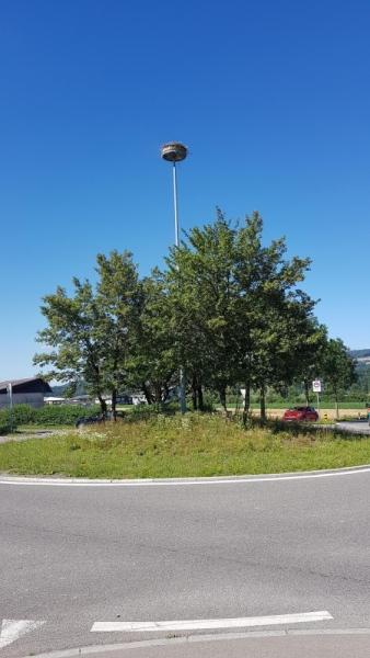 Kreisel mit Storchennest (Niederwil)