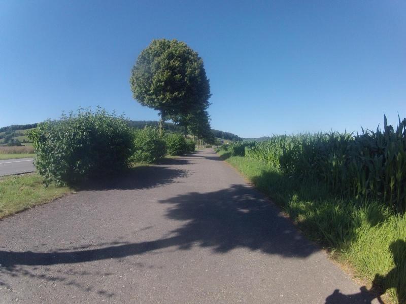 Birrfeld