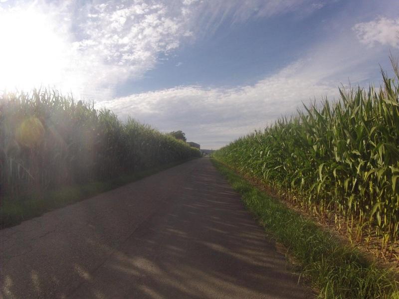 Maisfelder im Seetal