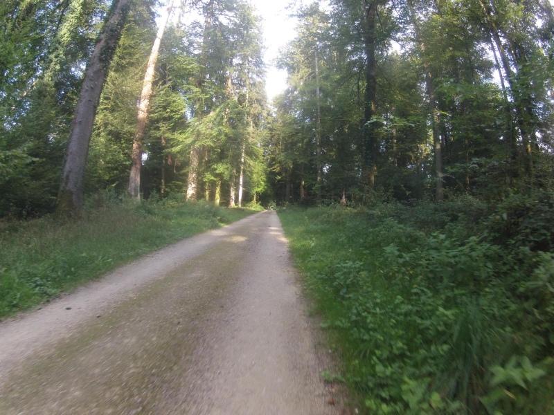 Durch den Buchserwald
