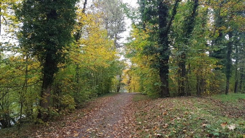 Herbstlicher Auenwald