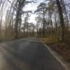Auenwald zwischen Brugg und Villnachern