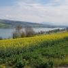 Beinwil am See