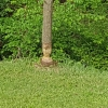 Baum vom Biber angefressen