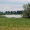 Naturschutzgebiet Flachsee
