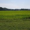 Wasserschloss-Reis