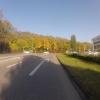 Herbstlicher Wald in Buchs (AG)