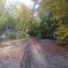 Unterwegs im herbstlichen Wald