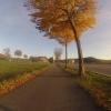herbsltiche Bäume