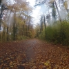 Herbstwald und Nieselregen