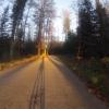 Waldeingang