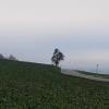 Baum unter Nebeldecke