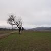 Winterstimmung im Rheintal