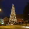 Weihnachtsbaum in Birmenstorf