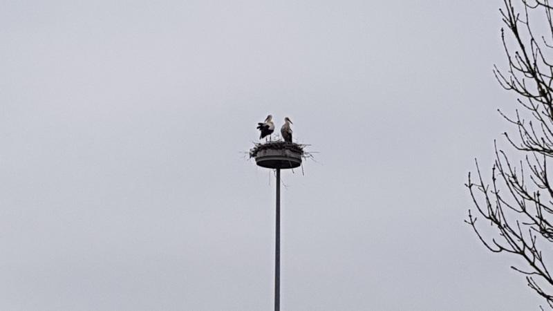 Bewohner im Storchennest