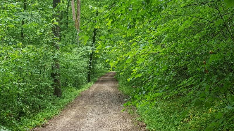 Gravel durch den Wald im Reusstal