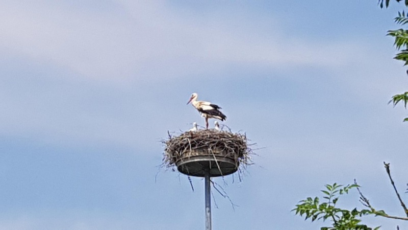 Familie Storch