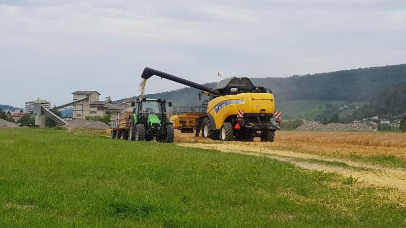 Getreideernte in Wettingen