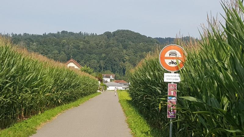 Maisfelder bei Othmarsingen