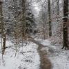 Winterlich weisser Wald