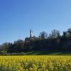 Rapsfeld und Kirche von Rein