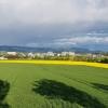 Bick zum Birrfeld und hinter dem Regen