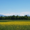 Blick über das Reusstal zu den Alpen