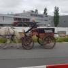 Kutsche in Mägenwil