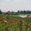Flachsee beim Bremgarten an der Reuss
