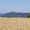 Getreidefeld und darüber die Habsburg
