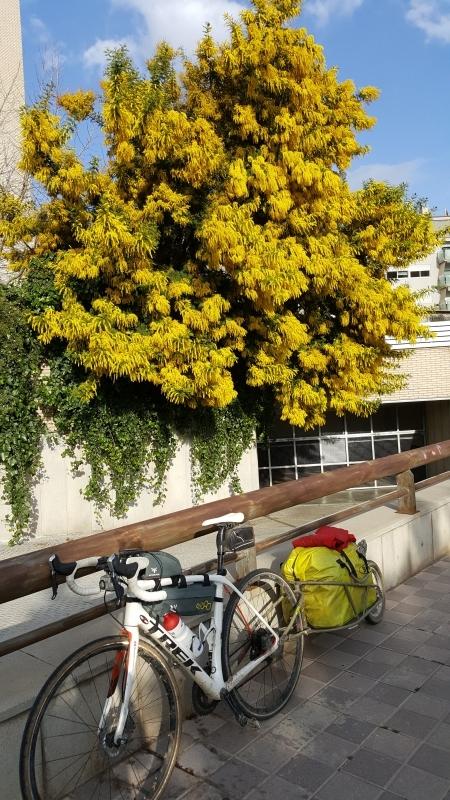 Frühling in Barcelona