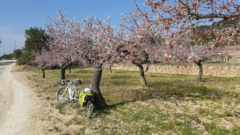 Unter Mandelblüten