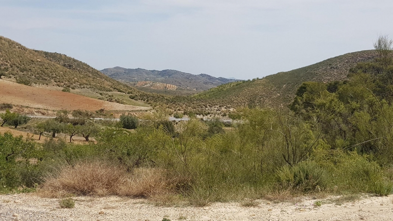 La Rambla Aljibe - Los Molinos