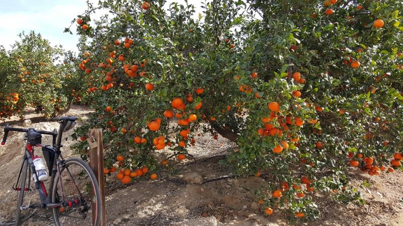 Orangen aus Andalusien