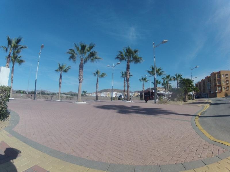 Palmen von San Juan