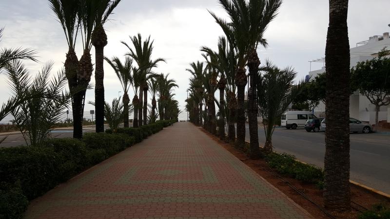 Palmenallee vor dem Hotel