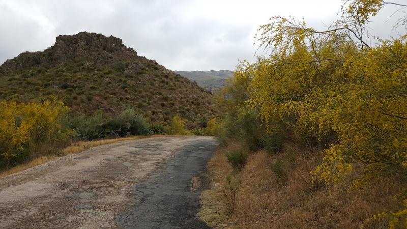 Sierra Cabrera blüht