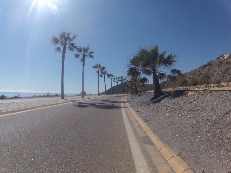 Palmen an der Küstenstrasse