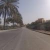 Palmen an der Strasse