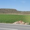 Gemüsefeld in Andalusien